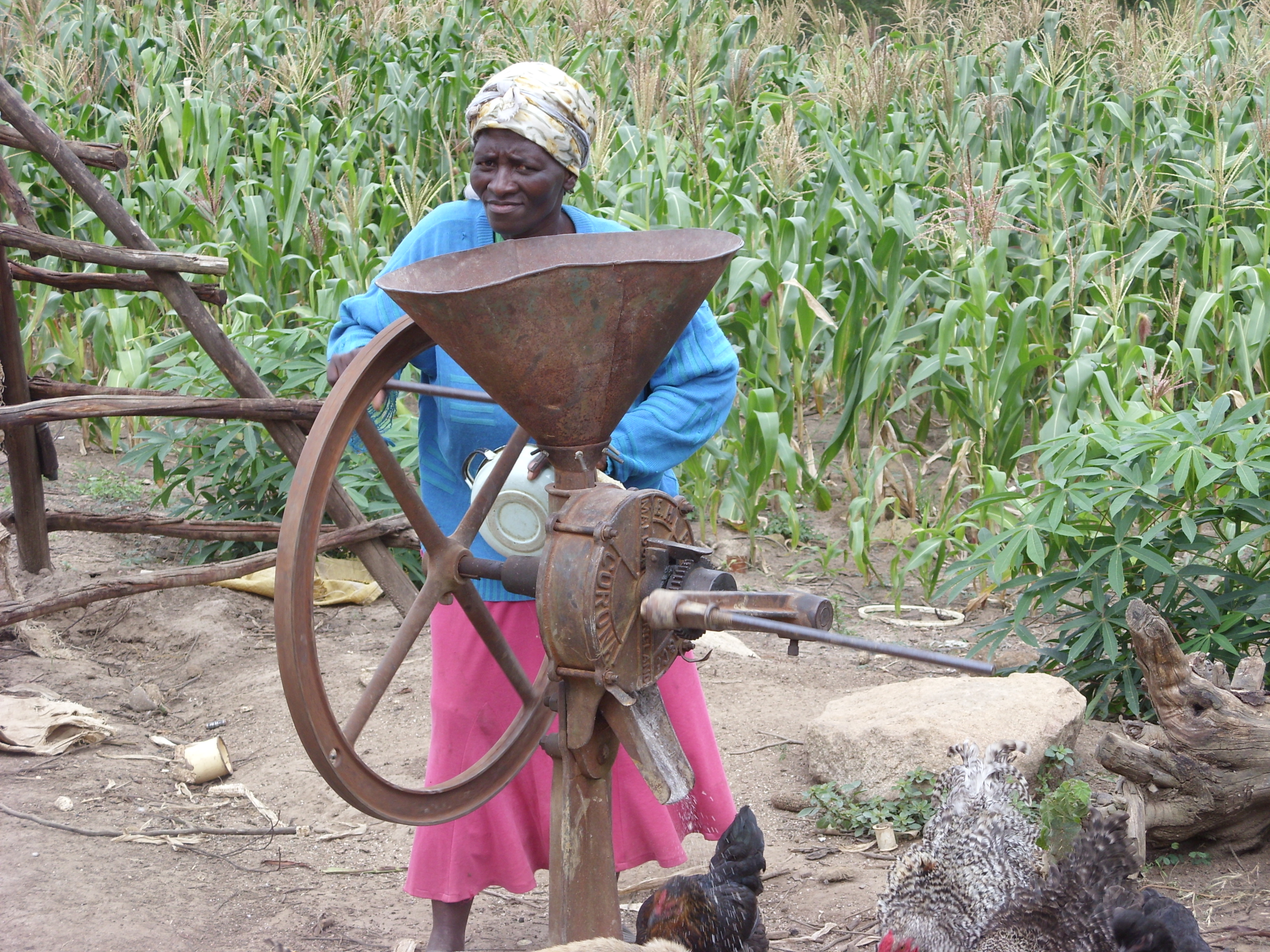 Grinding corn for food