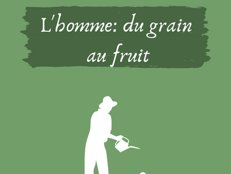 Catho & écolo: L'Homme; du grain au fruit.