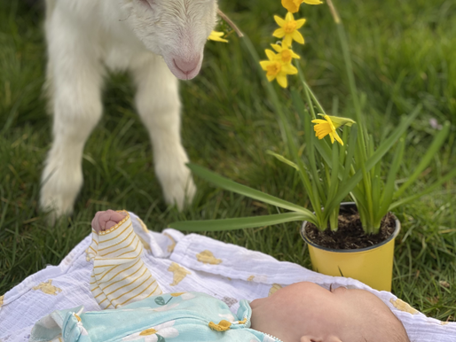Daffodils and babies