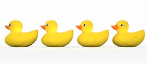ducks in a row.png