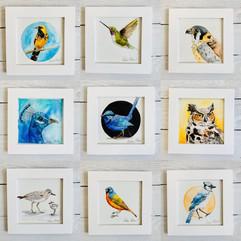 Birdtober Series by Andrea Holmes