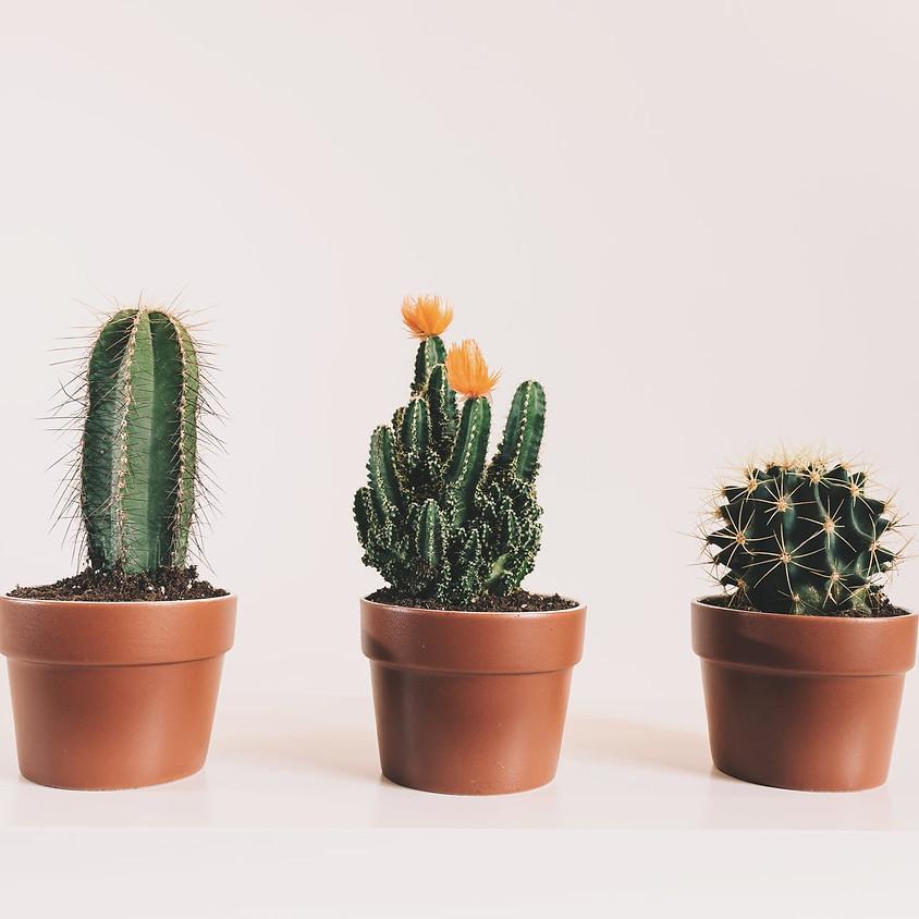 Still Life Nights: Cactus & Succulents