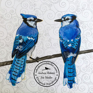 Pair of Bluejays