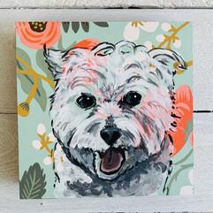 Westie Pet Portrait by Andrea Holmes