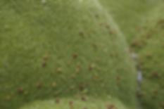 Rare Moss
