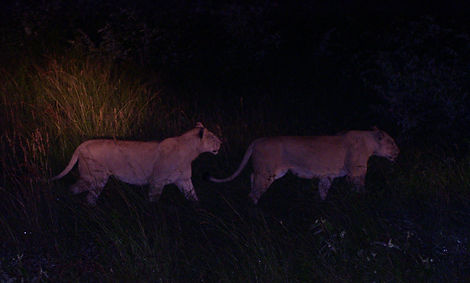 Hunting duo