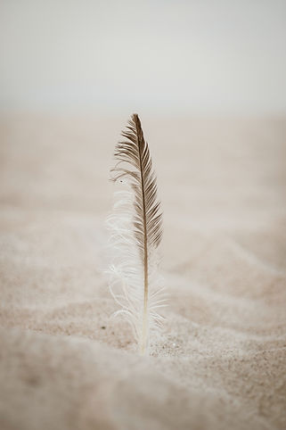 close-up-photo-of-brown-feather-on-sand-