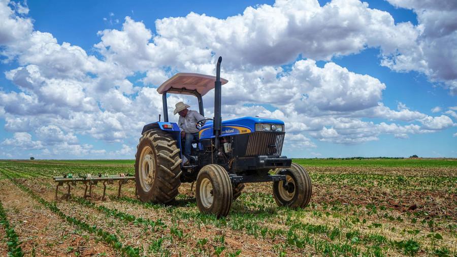 Un millón 198 mil toneladas de producción de frijol se prevé para este año en el país