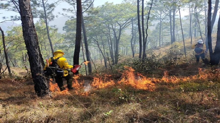 Se registran 21 incendios forestales activos ubicados en 10 estados del país: Conafor