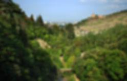 Botanical - thousandwonders Website.jpg