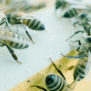 O que faz um inseto ser um inseto?