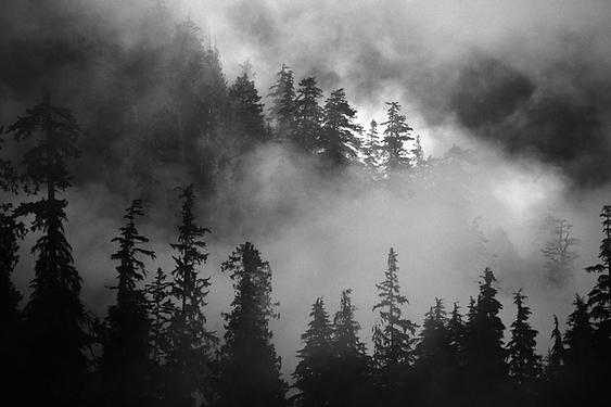Wald Transparent