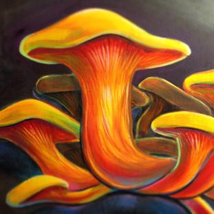 Jack O' Lantern Mushroom