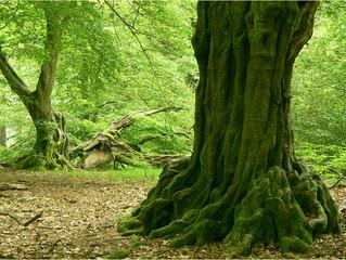 Réserve Naturelle de la forêt de la massane
