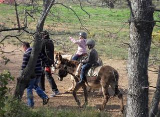 Visite de la ferme aux ânes