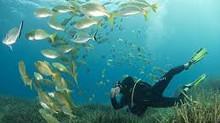 Réserve Naturelle Marine Cerbere - Banyuls