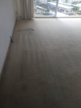 Excellence Carpet Stem Cleaning