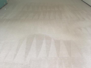 Why Steam Cleaning Carpet Is More Sanitary?