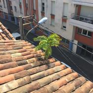 un arbre sur le toit 🌱