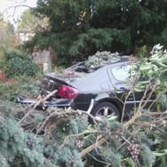 Un arbre sur la voiture 🌱