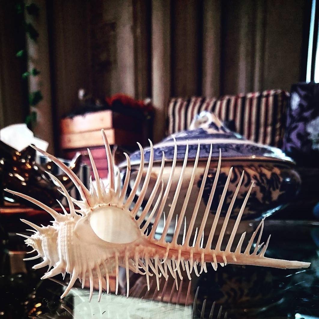 venus comb shell