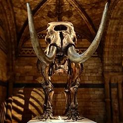 American Mastodon NHM Copyright Natalie Lawrence