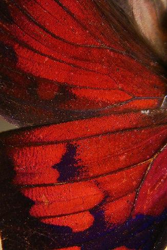 LeafButterfly.JPG