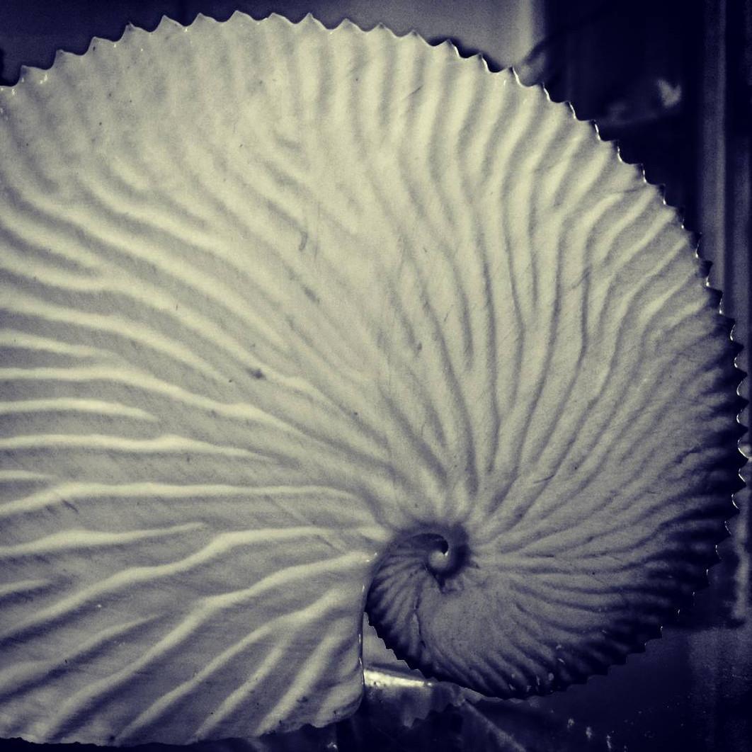 White paper nautilus or argonaut