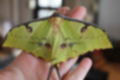 moth 1.jpg