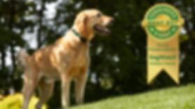 Dogwatch Award.jpg