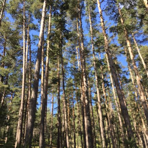 Ormanlarımız