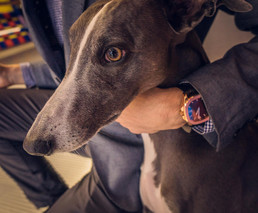 Luxury watch and my dog