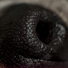 close up - macro (19 of 24).jpg