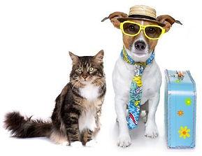 traveling-pets.jpg