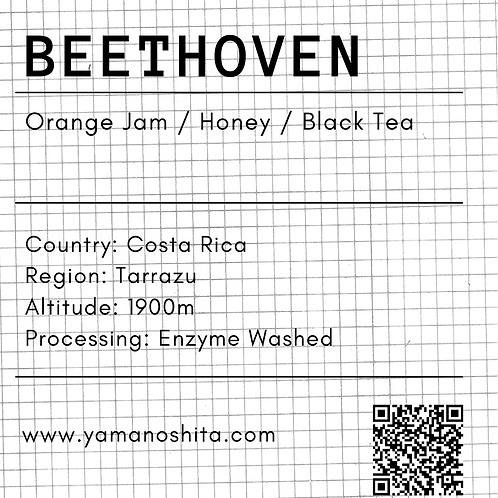 Beethoven Costa Rica Washed