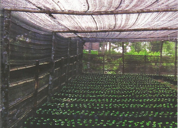 Coffee Handbook for Farmers: Proper Nursery Construction