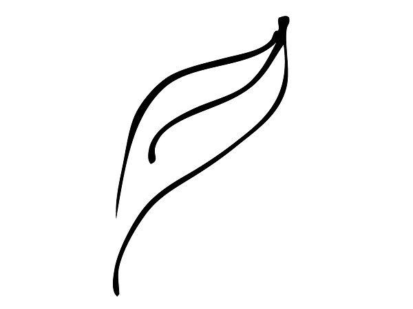 A beautiful leaf drawing by anforma.