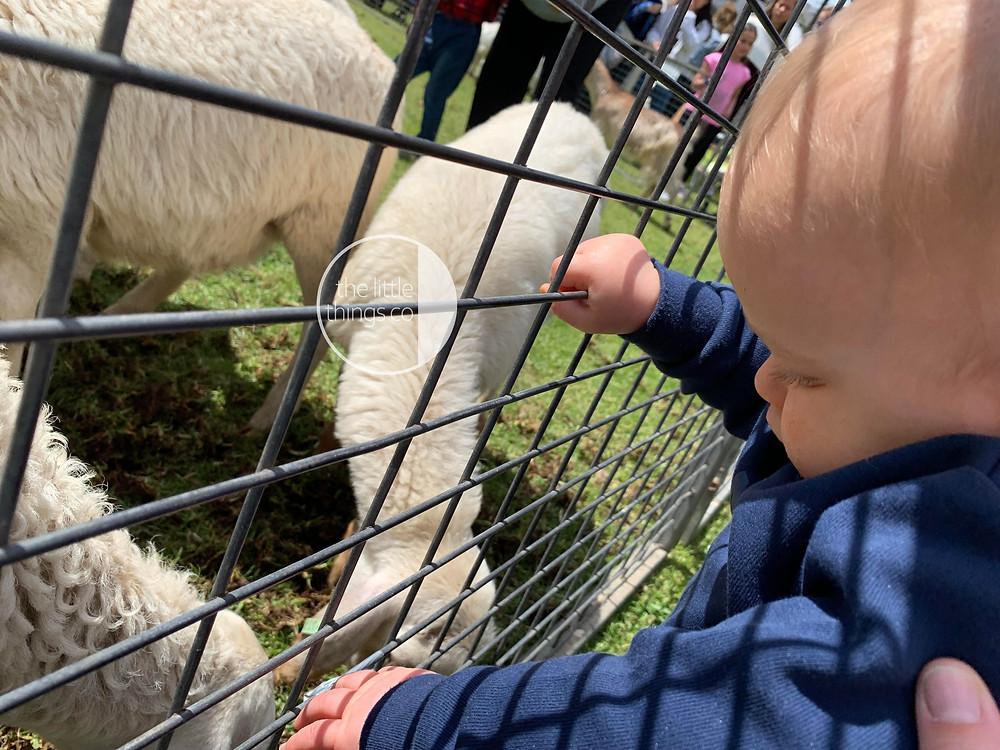 Baby farm photography