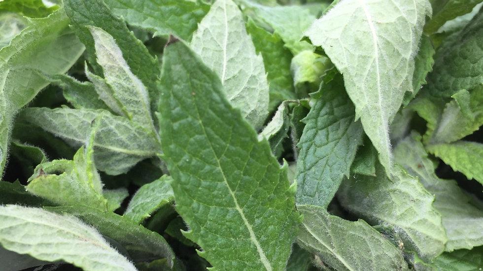 Gwen's Garden Mint
