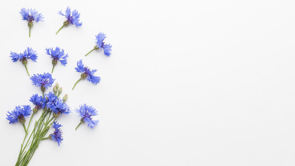 top-view-cornflowers-with-copy-space.jpg