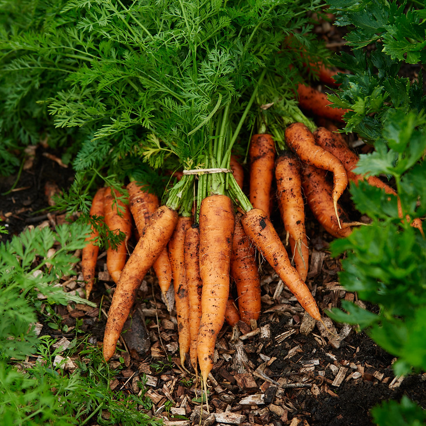 Regenerative Soil Health For Horticultural Growers *NEW DATE*