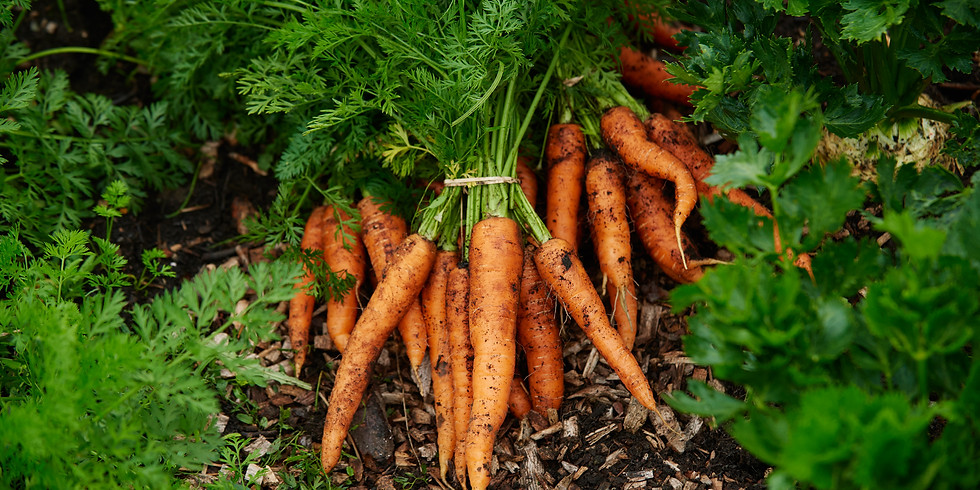 Regenerative Soil Health For Horticultural Growers