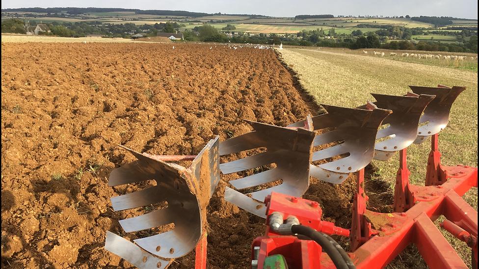 ploughing heritagewheat (1).png