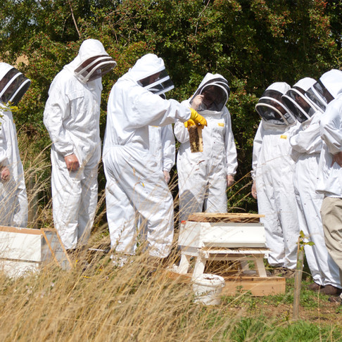 Introduction to Beekeeping Courses at FarmED