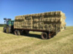 hard horse hay (1).jpg