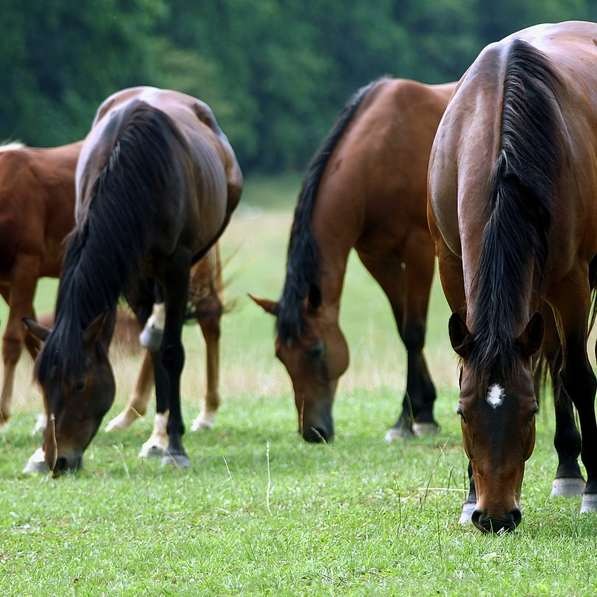 Managing Grassland for Horse Health and Biodiversity