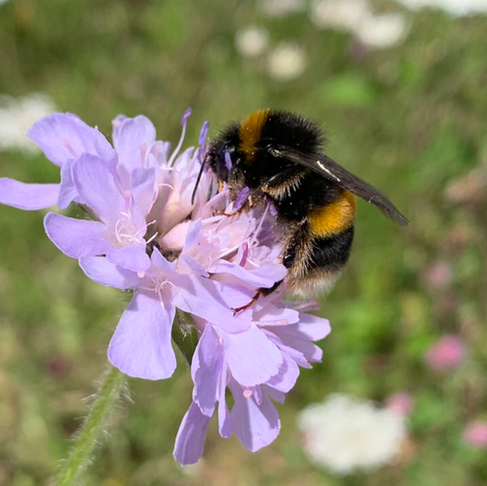 Bumblebee Conservation Trust at FarmED