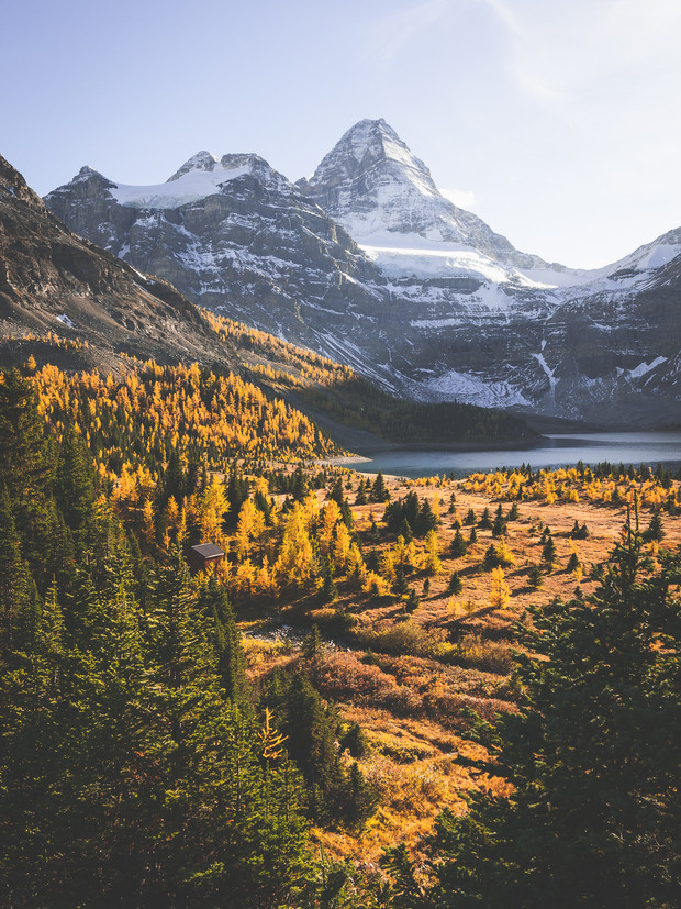 THE ASSINIBOINE LARCH MADNESS
