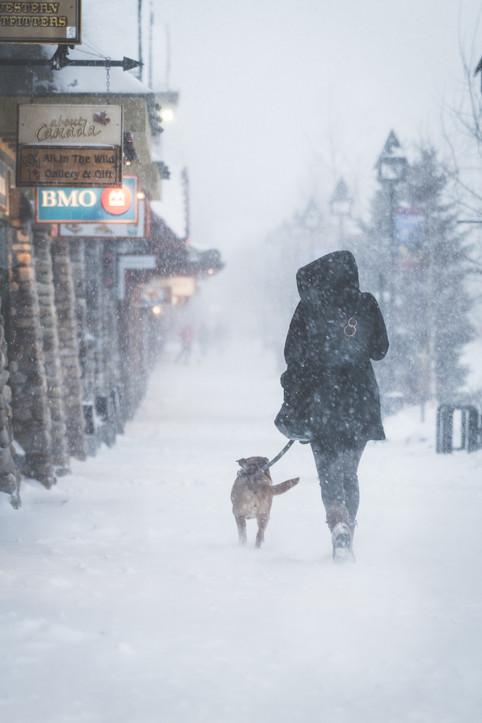 Banff Snow Storm-0892.jpg