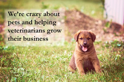 Crazy for Pets.jpg